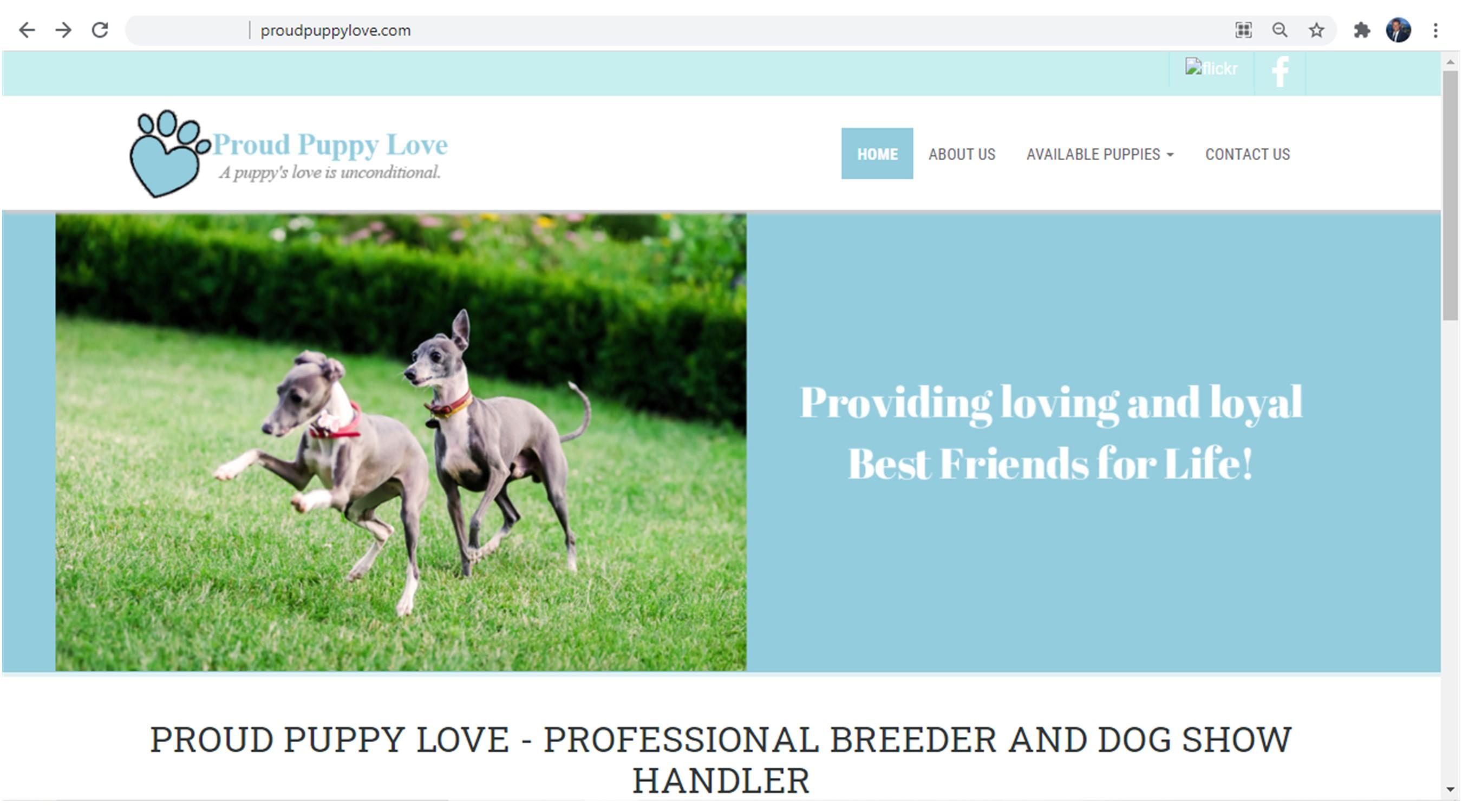kim, dildine, dog, breeder, homepage, kim-dildine, kim dildine breeder, starbreeder, dog-breeder, willow, springs, mo, missouri, aphis, inspection, record, grey, hound, greyhound, puppy, mill, pu
