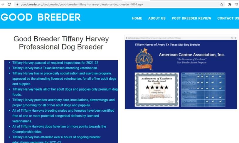 tiffany, harvey, dog, breeder, goodbreeder, tiffany-harvey, dog-breeder, avery, tx, texas, aussie, australian, shepherd, mix, mini, miniature, aussiedoodles, puppy, mill, puppymill, usda, inspection, records, kennel